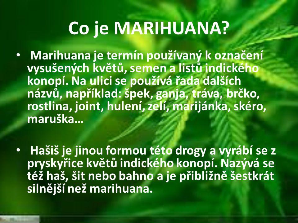Co je MARIHUANA? Marihuana je termín používaný k označení vysušených květů, semen a listů indického konopí. Na ulici se používá řada dalších názvů, na