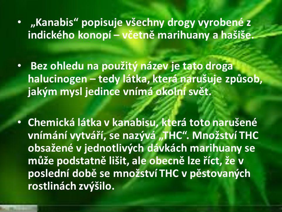 """""""Kanabis"""" popisuje všechny drogy vyrobené z indického konopí – včetně marihuany a hašiše. Bez ohledu na použitý název je tato droga halucinogen – tedy"""