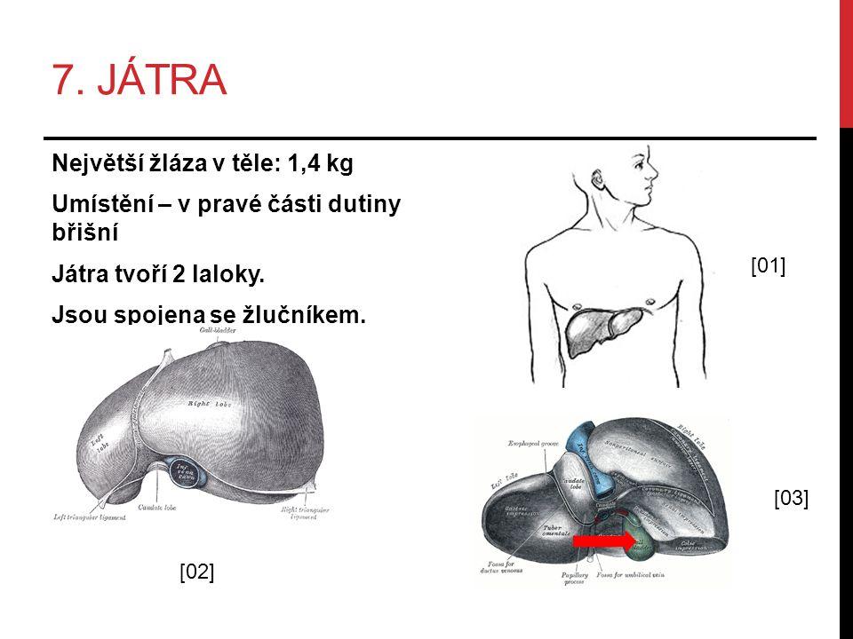 7. JÁTRA Největší žláza v těle: 1,4 kg Umístění – v pravé části dutiny břišní Játra tvoří 2 laloky. Jsou spojena se žlučníkem. [02] [01] [03]