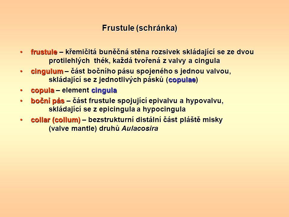 Frustule (schránka) frustule – křemičitá buněčná stěna rozsivek skládající se ze dvou protilehlých thék, každá tvořená z valvy a cingulafrustule – kře