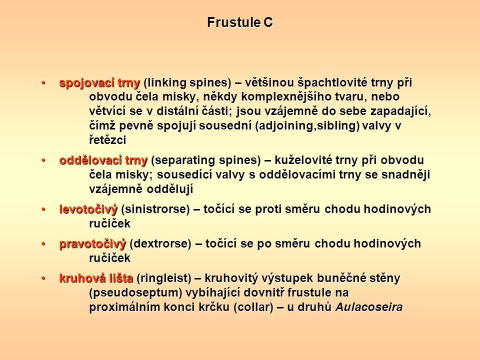 Frustule C spojovací trny (linking spines) – většinou špachtlovité trny při obvodu čela misky, někdy komplexnějšího tvaru, nebo větvící se v distální