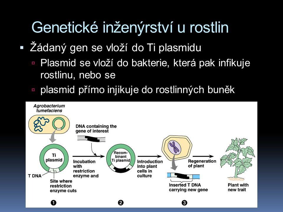 Genetické inženýrství u rostlin  Žádaný gen se vloží do Ti plasmidu  Plasmid se vloží do bakterie, která pak infikuje rostlinu, nebo se  plasmid př