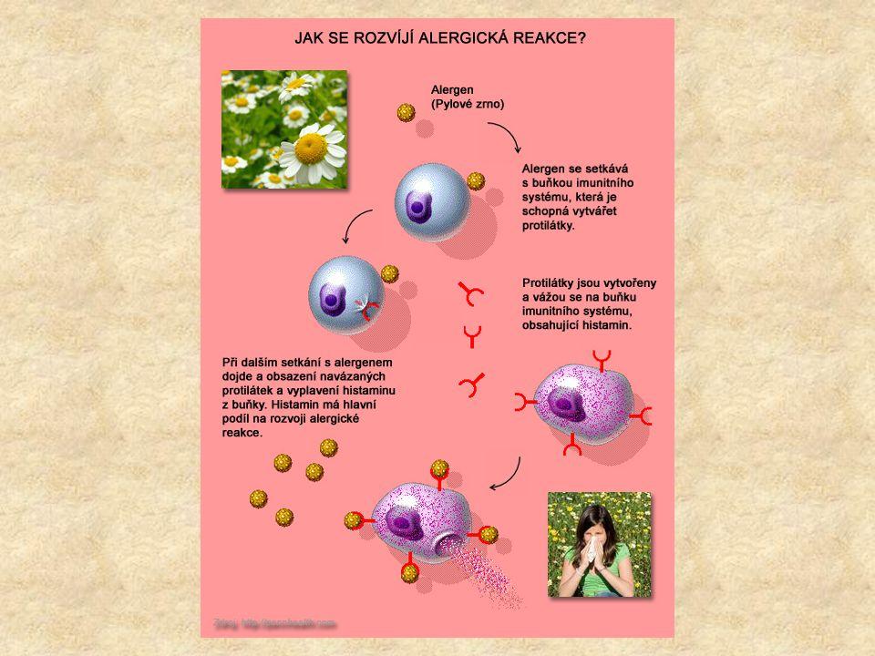 Systémová reakce - anafylaktický šok Reakce antigenů s protilátkami v oběhovém systému a ve všech tkáních.