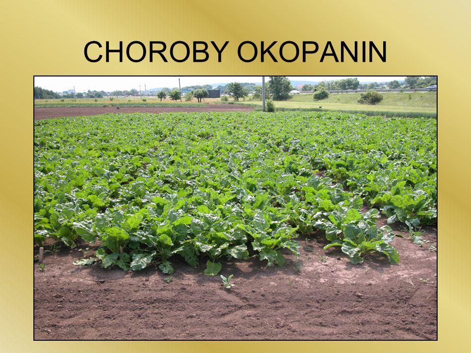 CHOROBY OKOPANIN