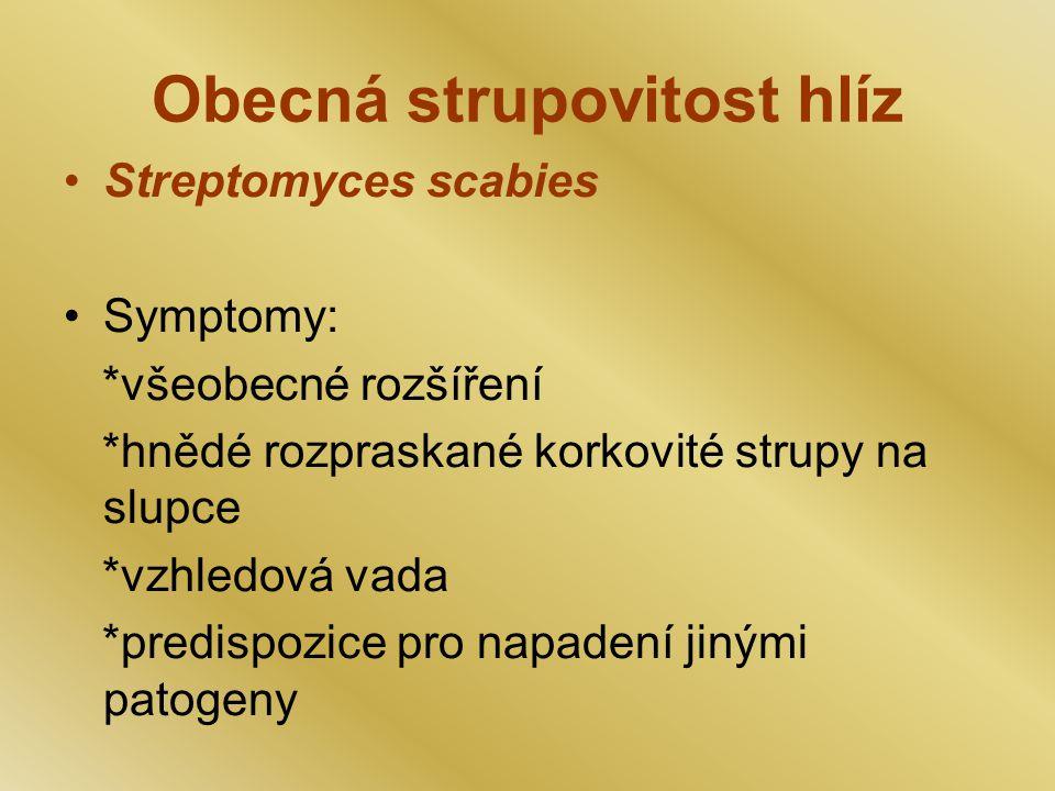 Obecná strupovitost hlíz Streptomyces scabies Symptomy: *všeobecné rozšíření *hnědé rozpraskané korkovité strupy na slupce *vzhledová vada *predispozice pro napadení jinými patogeny