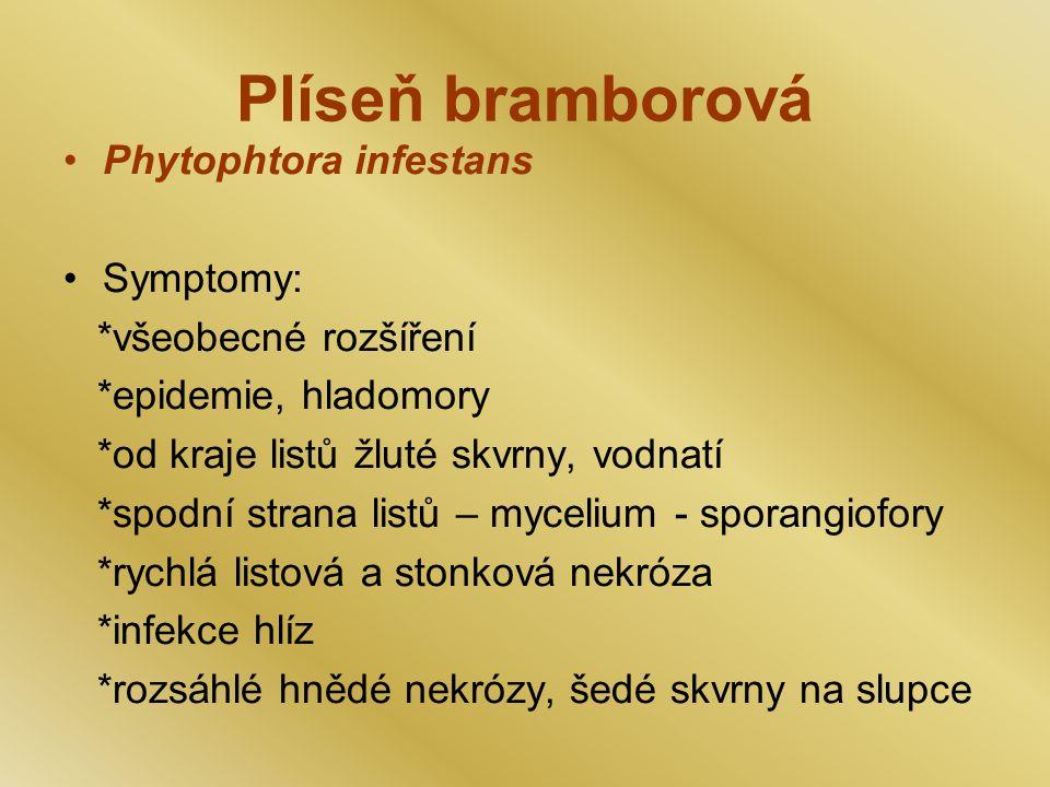 Plíseň bramborová Phytophtora infestans Symptomy: *všeobecné rozšíření *epidemie, hladomory *od kraje listů žluté skvrny, vodnatí *spodní strana listů