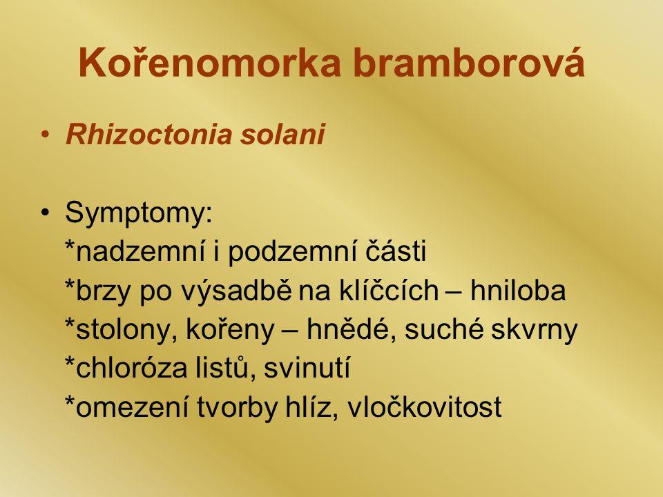 Kořenomorka bramborová Rhizoctonia solani Symptomy: *nadzemní i podzemní části *brzy po výsadbě na klíčcích – hniloba *stolony, kořeny – hnědé, suché