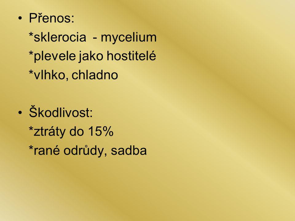 Přenos: *sklerocia - mycelium *plevele jako hostitelé *vlhko, chladno Škodlivost: *ztráty do 15% *rané odrůdy, sadba