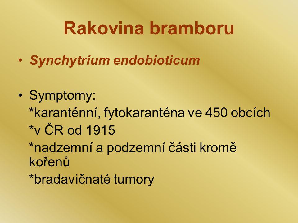 Rakovina bramboru Synchytrium endobioticum Symptomy: *karanténní, fytokaranténa ve 450 obcích *v ČR od 1915 *nadzemní a podzemní části kromě kořenů *bradavičnaté tumory