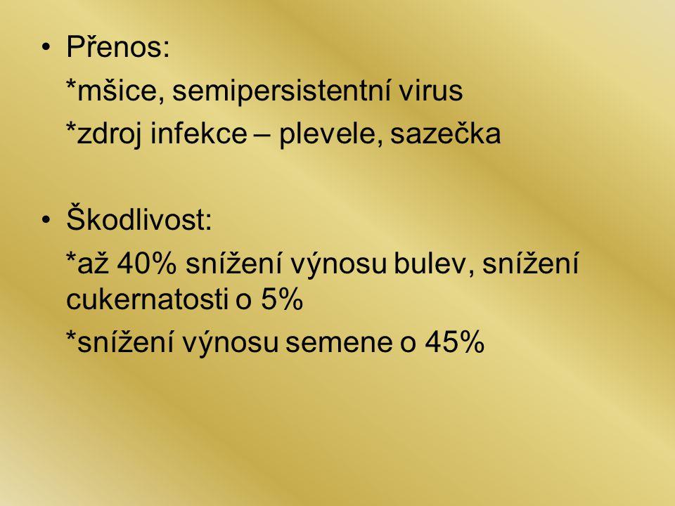 Přenos: *mšice, semipersistentní virus *zdroj infekce – plevele, sazečka Škodlivost: *až 40% snížení výnosu bulev, snížení cukernatosti o 5% *snížení