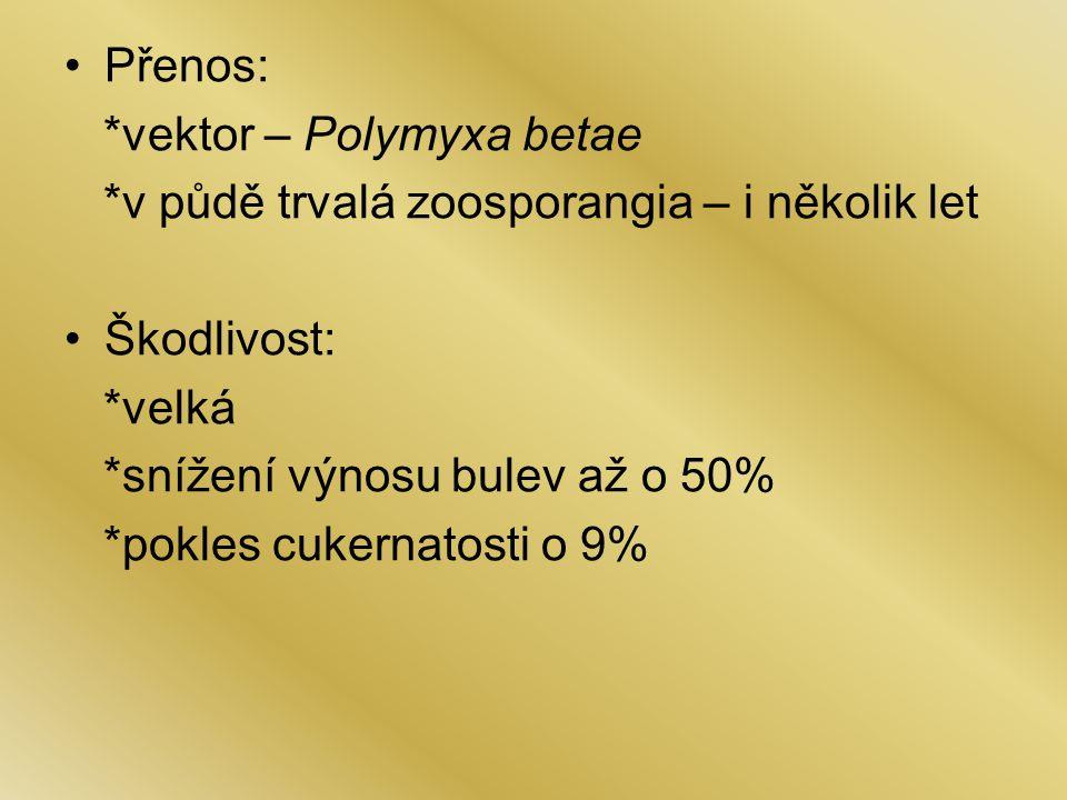 Přenos: *vektor – Polymyxa betae *v půdě trvalá zoosporangia – i několik let Škodlivost: *velká *snížení výnosu bulev až o 50% *pokles cukernatosti o 9%