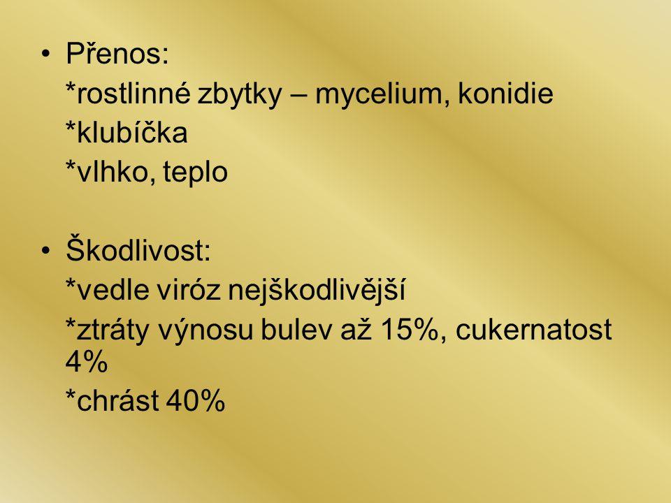 Přenos: *rostlinné zbytky – mycelium, konidie *klubíčka *vlhko, teplo Škodlivost: *vedle viróz nejškodlivější *ztráty výnosu bulev až 15%, cukernatost 4% *chrást 40%