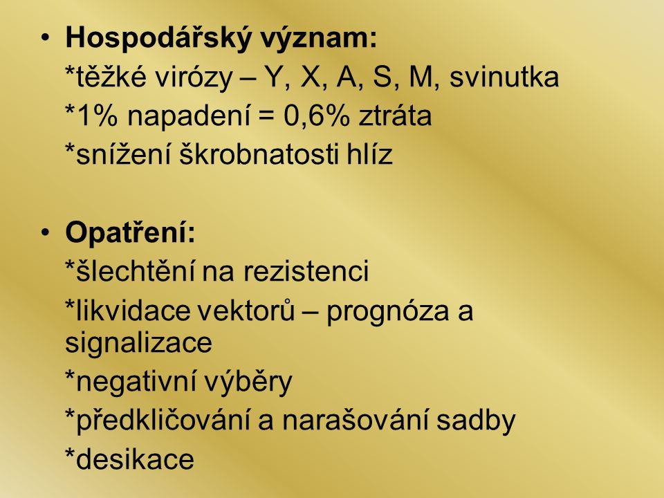 Hospodářský význam: *těžké virózy – Y, X, A, S, M, svinutka *1% napadení = 0,6% ztráta *snížení škrobnatosti hlíz Opatření: *šlechtění na rezistenci *likvidace vektorů – prognóza a signalizace *negativní výběry *předkličování a narašování sadby *desikace