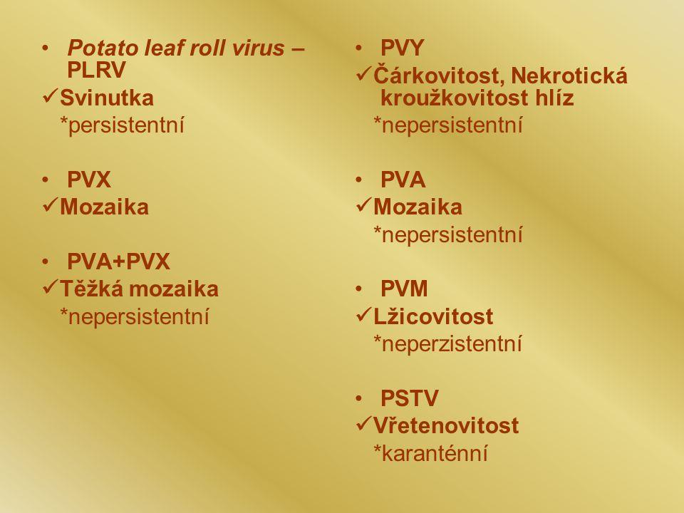Potato leaf roll virus – PLRV Svinutka *persistentní PVX Mozaika PVA+PVX Těžká mozaika *nepersistentní PVY Čárkovitost, Nekrotická kroužkovitost hlíz *nepersistentní PVA Mozaika *nepersistentní PVM Lžicovitost *neperzistentní PSTV Vřetenovitost *karanténní