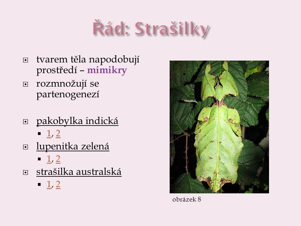  tvarem těla napodobují prostředí – mimikry  rozmnožují se partenogenezí  pakobylka indická  1, 2 12  lupenitka zelená  1, 2 12  strašilka aust