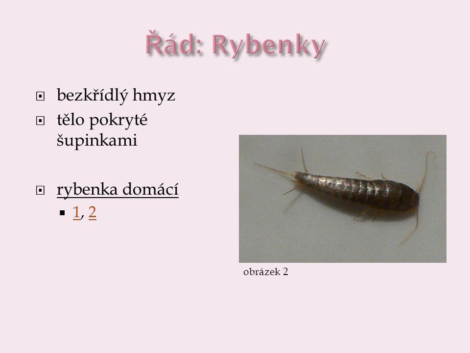  bezkřídlý hmyz  tělo pokryté šupinkami  rybenka domácí  1, 2 12 obrázek 2