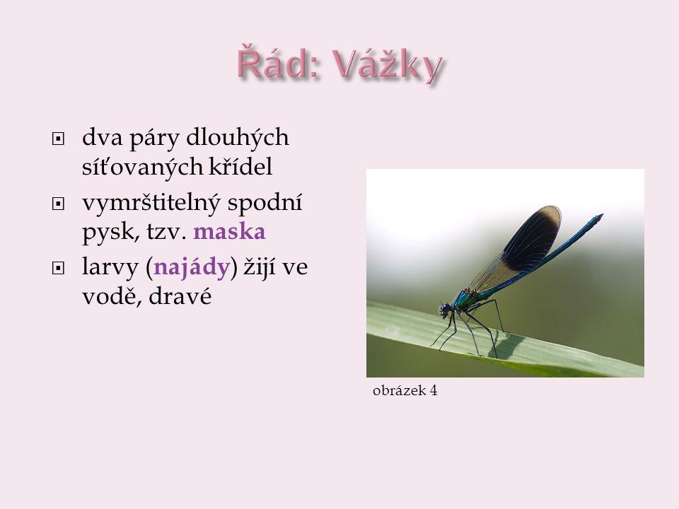  dva páry dlouhých síťovaných křídel  vymrštitelný spodní pysk, tzv. maska  larvy ( najády ) žijí ve vodě, dravé obrázek 4