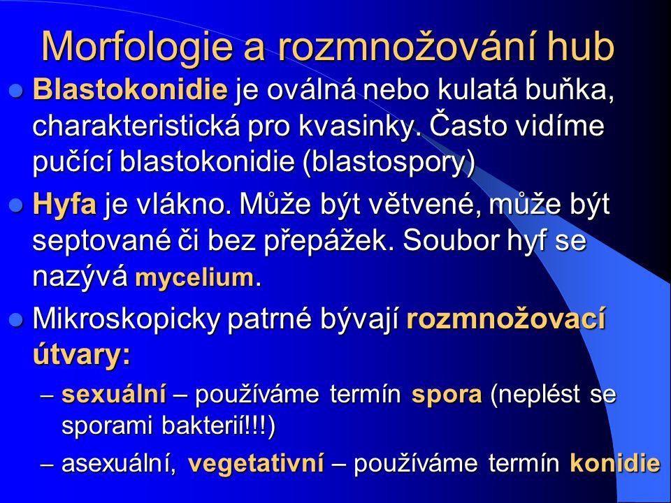 Obecná charakteristika hub Houby jsou eukaryotní organismy, na rozdíl od prokaryotních bakterií Houby jsou eukaryotní organismy, na rozdíl od prokaryo