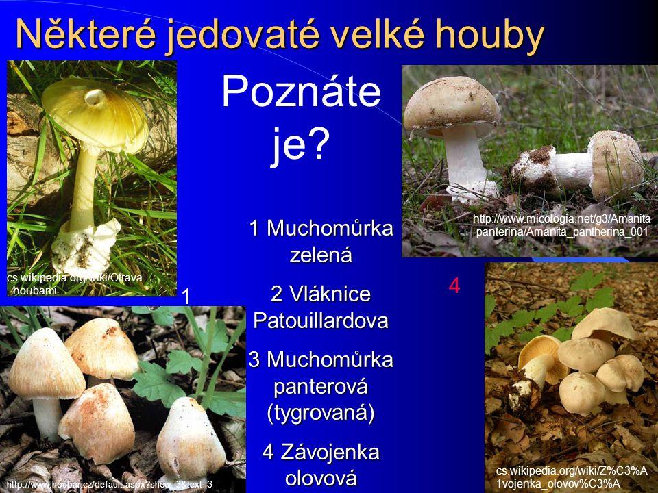 Houby a zdraví Kromě mikroskopických hub, o kterých je řeč v tomto praktiku, nesmíme zapomenout ani na houby, které mají makroskopické plodnice Kromě