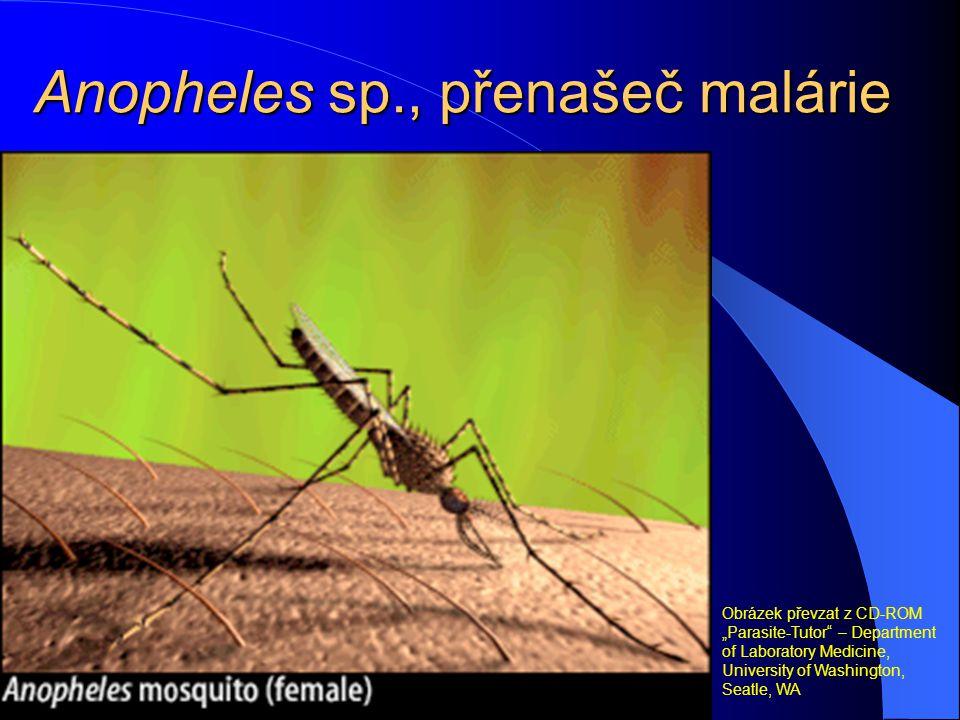 "Plasmodium falciparum – ""prstýnky"" (trofozoity) a gametocyt Obrázek převzat z CD-ROM ""Parasite-Tutor"" – Department of Laboratory Medicine, University"
