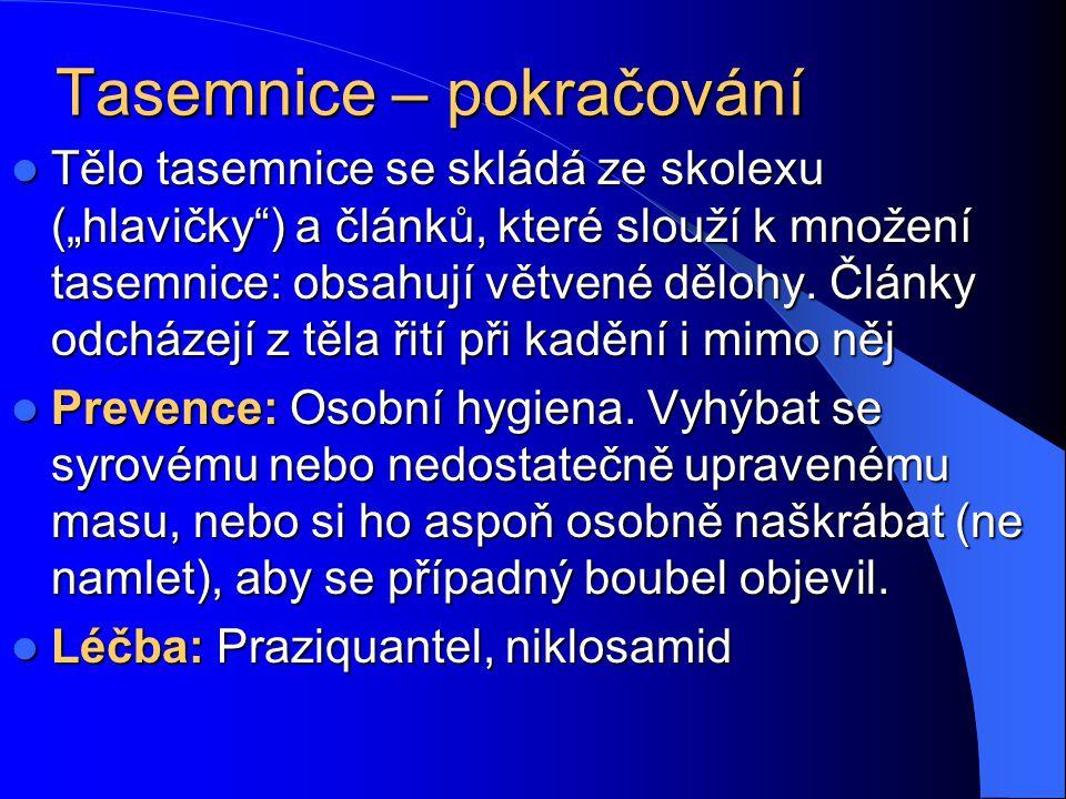 """Tasemnice bezbranná (Taenia saginata) Tasemnice dlouhočlenná (Taenia solium) Dvě """"klasické"""" tasemnice. Člověk se nakazí po požití nedostatečně upraven"""