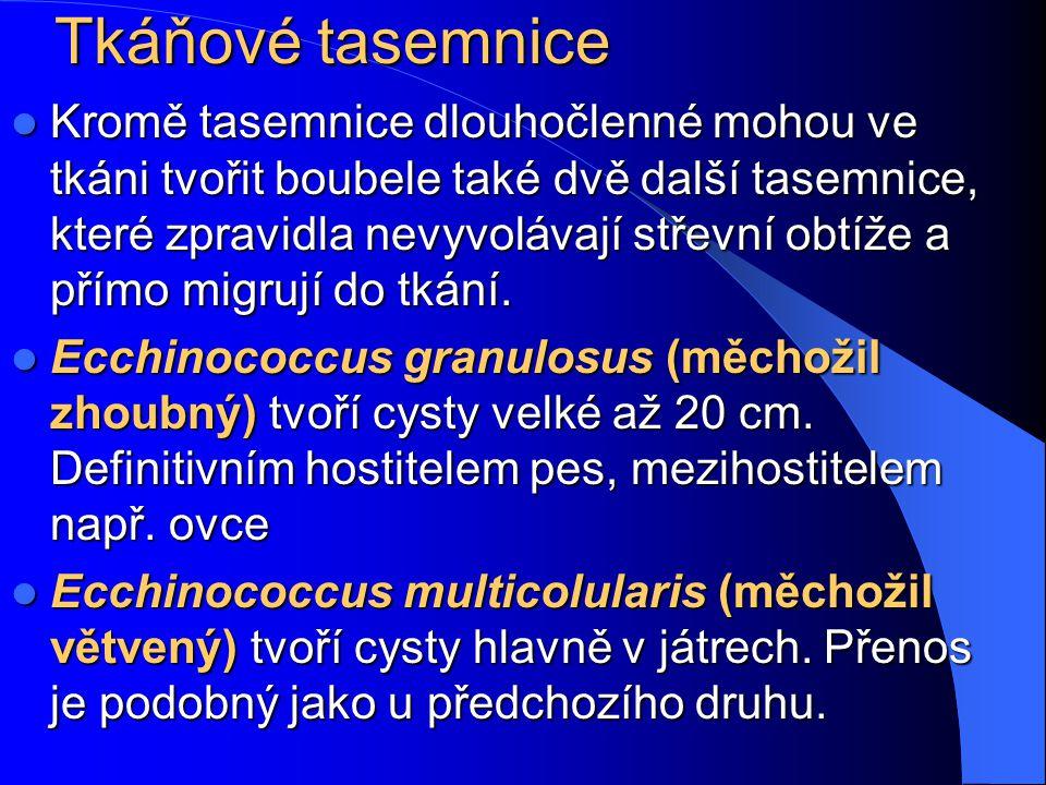 Hymenolepis nana http://www.infovek.sk/predmety/biologia/metodicke/ploskavce/index.php