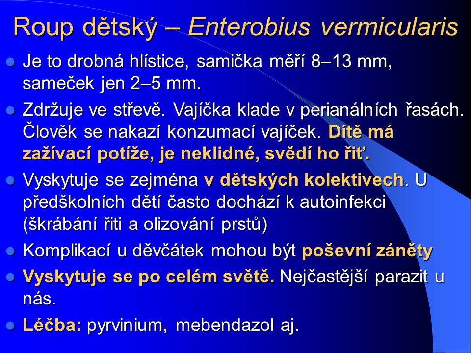 Hlístice www.gsbs.utmb.edu/microbook/ch086.htm