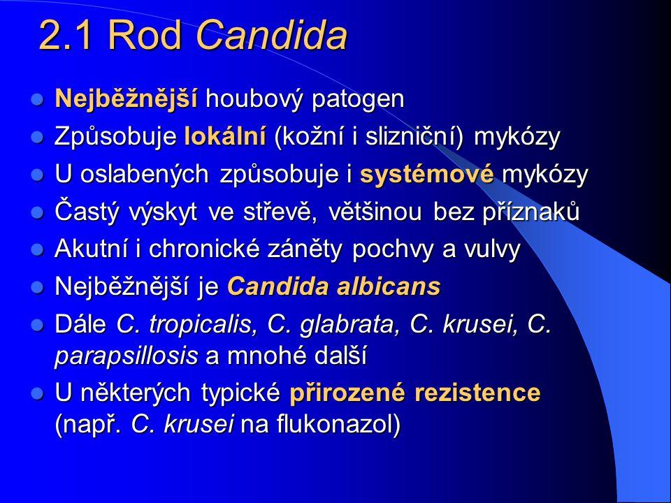 Společné vlastnosti kvasinek Jsou to kulaté, oválné i protáhlé buňky – blastokonidie. Jsou zřetelně větší než bakterie (průměr 3–15 µm). Pučí z nich d