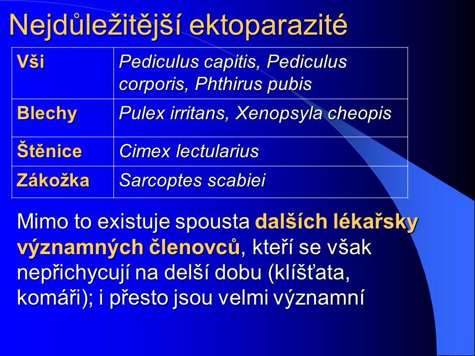 Nejdůležitější endoparazité Prvoci Giardia lamblia, Entamoeba coli, rod Plasmodium, Trichomonas vaginalis, Toxoplasma gondii Motolice Schistosoma sp.,