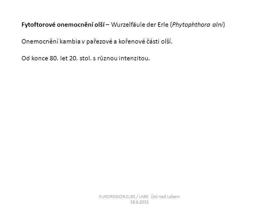 Fytoftorové onemocnění olší – Wurzelfäule der Erle (Phytophthora alni) Onemocnění kambia v pařezové a kořenové části olší. Od konce 80. let 20. stol.