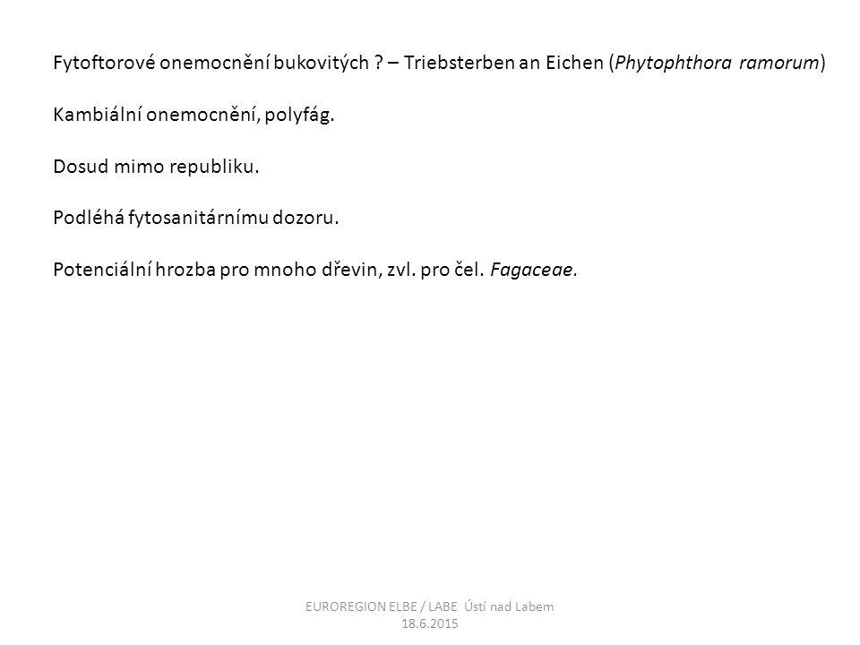 Fytoftorové onemocnění bukovitých ? – Triebsterben an Eichen (Phytophthora ramorum) Kambiální onemocnění, polyfág. Dosud mimo republiku. Podléhá fytos