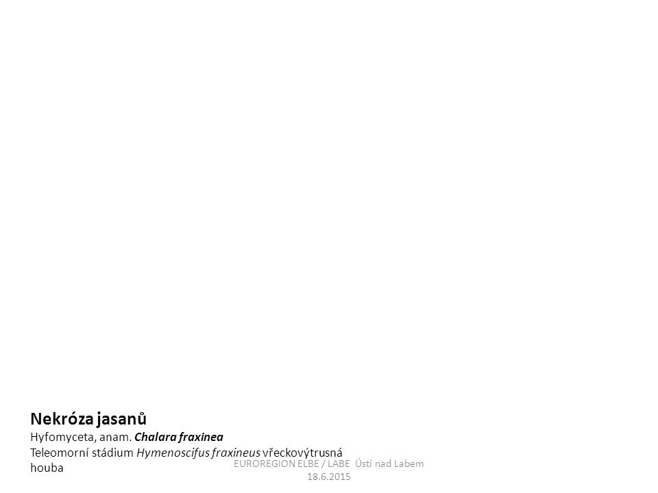 Nekróza jasanů Hyfomyceta, anam. Chalara fraxinea Teleomorní stádium Hymenoscifus fraxineus vřeckovýtrusná houba EUROREGION ELBE / LABE Ústí nad Labem