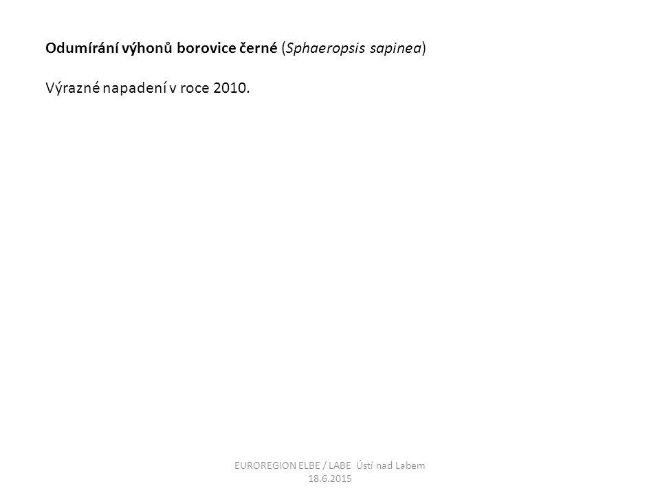 Odumírání výhonů borovice černé (Sphaeropsis sapinea) Výrazné napadení v roce 2010. EUROREGION ELBE / LABE Ústí nad Labem 18.6.2015