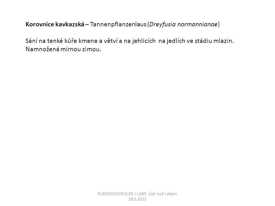 Korovnice kavkazská – Tannenpflanzenlaus (Dreyfusia normannianae) Sání na tenké kůře kmene a větví a na jehlicích na jedlích ve stádiu mlazin. Namnože