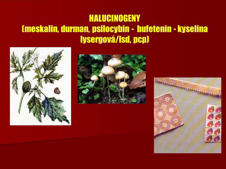 HALUCINOGENY (meskalin, durman, psilocybin - bufetenin - kyselina lysergová/lsd, pcp)