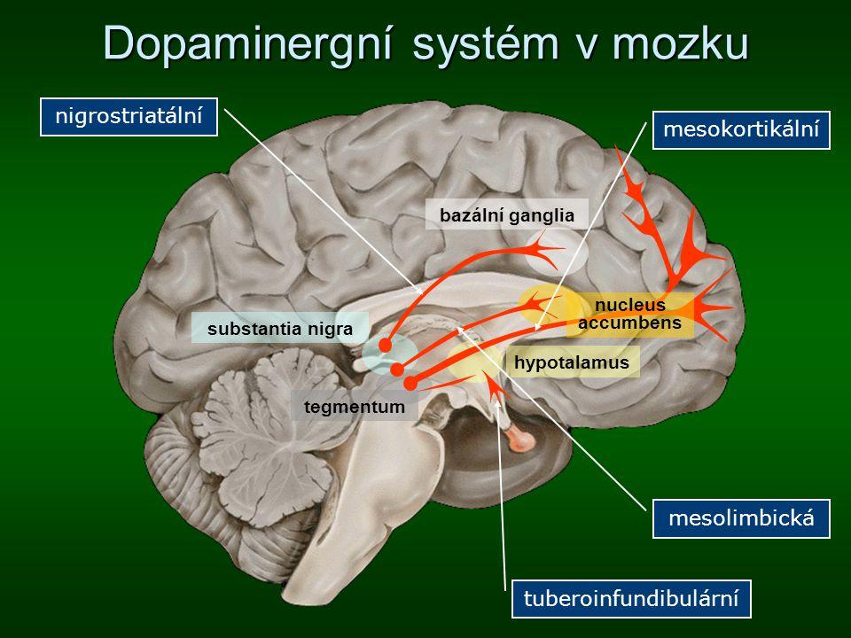 Dopaminergní systém v mozku bazální ganglia hypotalamus substantia nigra tegmentum nucleus accumbens mesokortikální mesolimbická nigrostriatální tuber