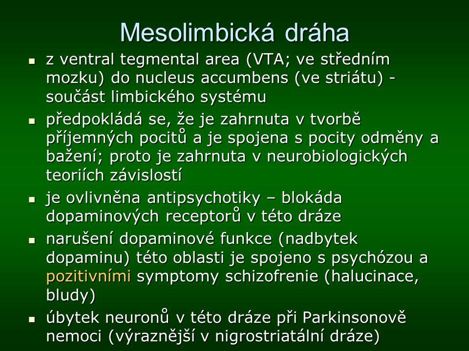Mesolimbická dráha z ventral tegmental area (VTA; ve středním mozku) do nucleus accumbens (ve striátu) - součást limbického systému z ventral tegmenta