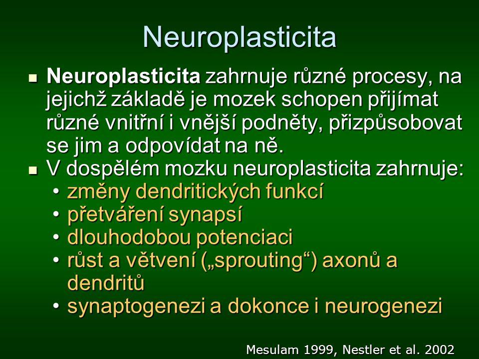 Neuroplasticita Neuroplasticita zahrnuje různé procesy, na jejichž základě je mozek schopen přijímat různé vnitřní i vnější podněty, přizpůsobovat se