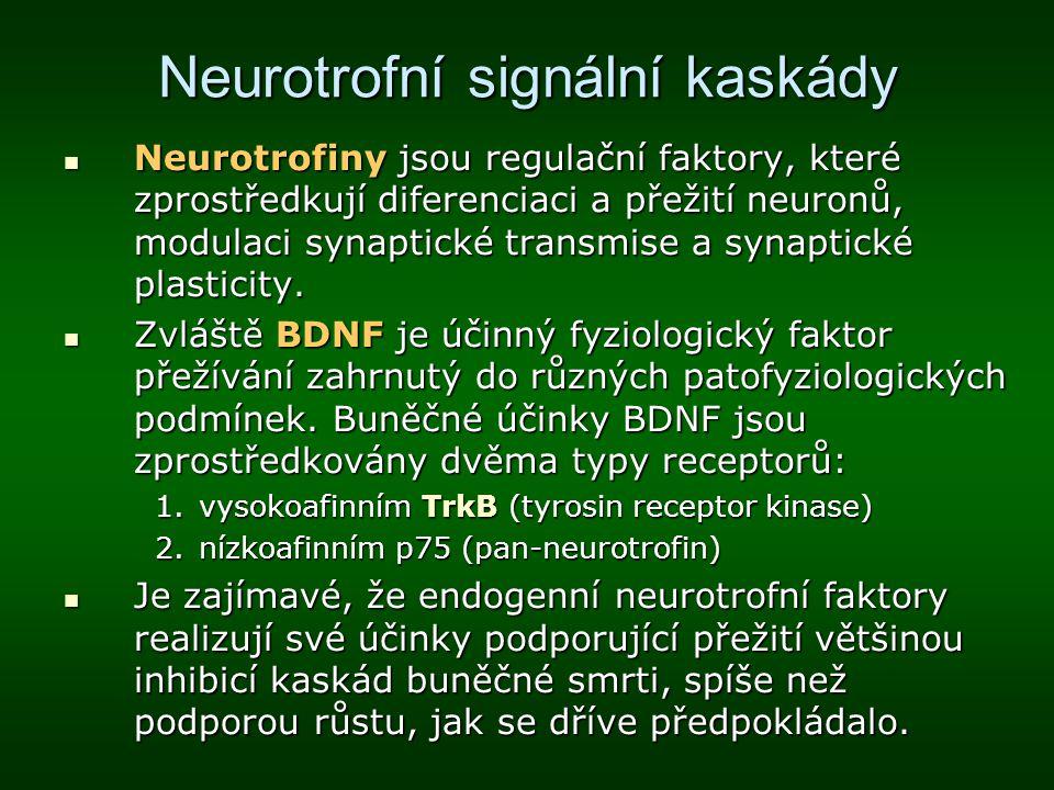 Neurotrofní signální kaskády Neurotrofiny jsou regulační faktory, které zprostředkují diferenciaci a přežití neuronů, modulaci synaptické transmise a