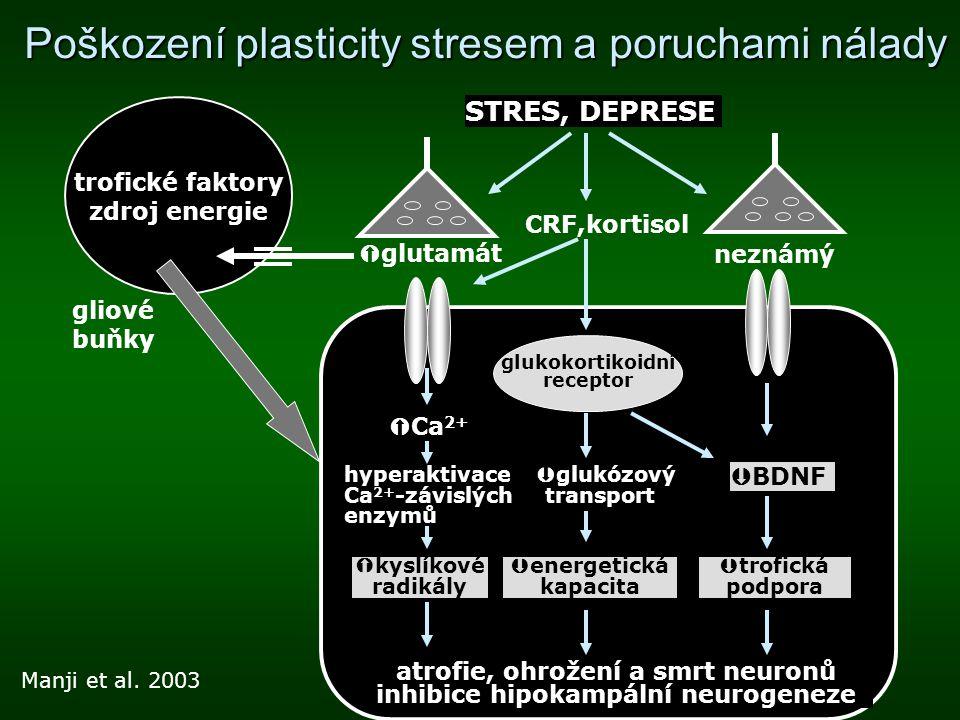 Poškození plasticity stresem a poruchami nálady Manji et al. 2003 trofické faktory zdroj energie gliové buňky  Ca 2+  BDNF glukokortikoidní receptor