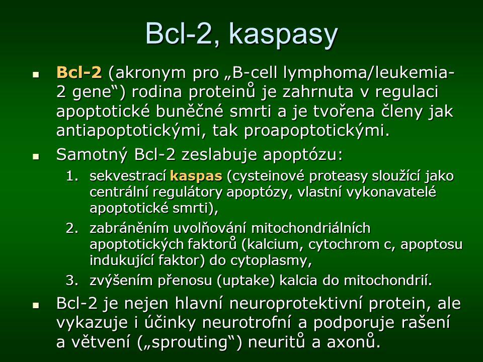 """Bcl-2, kaspasy Bcl-2 (akronym pro """"B-cell lymphoma/leukemia- 2 gene"""") rodina proteinů je zahrnuta v regulaci apoptotické buněčné smrti a je tvořena čl"""