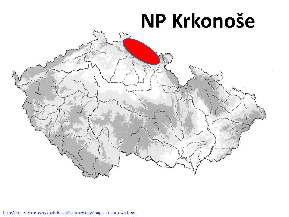 Hořec tolitovitý Patří mezi naše nejznámější chráněné rostliny, je ve znaku Krkonošského národního parku.