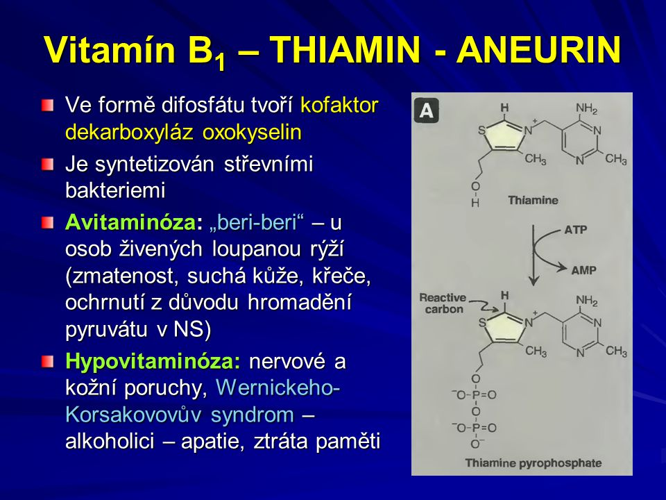 """Vitamín B 1 – THIAMIN - ANEURIN Ve formě difosfátu tvoří kofaktor dekarboxyláz oxokyselin Je syntetizován střevními bakteriemi Avitaminóza: """"beri-beri – u osob živených loupanou rýží (zmatenost, suchá kůže, křeče, ochrnutí z důvodu hromadění pyruvátu v NS) Hypovitaminóza: nervové a kožní poruchy, Wernickeho- Korsakovovův syndrom – alkoholici – apatie, ztráta paměti"""