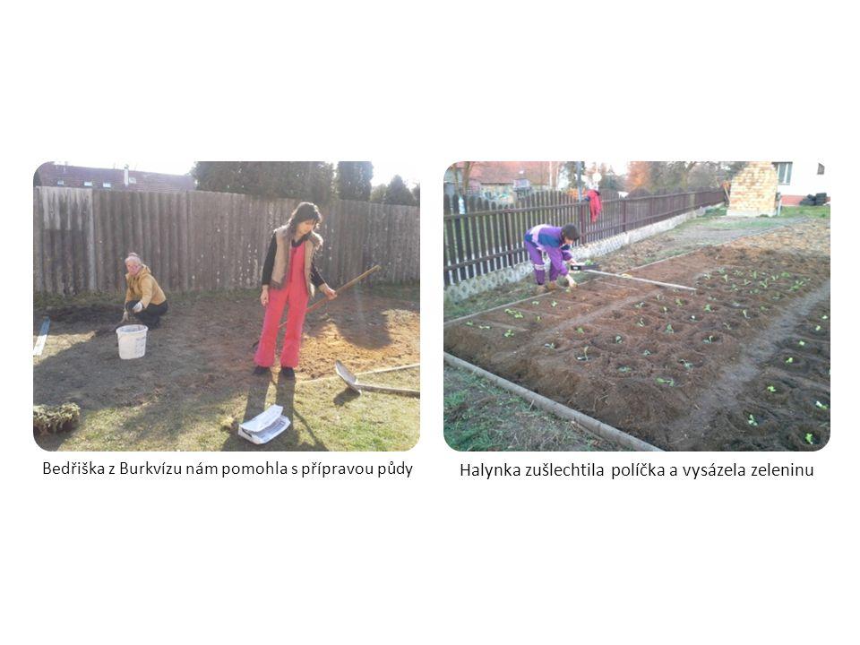 Prořezali jsme Lipnické lípy a akát na pozemku