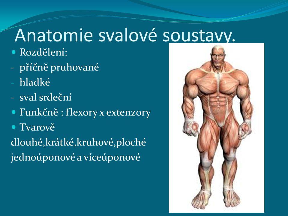 Anatomie svalové soustavy. Rozdělení: - příčně pruhované - hladké - sval srdeční Funkčně : flexory x extenzory Tvarově dlouhé,krátké,kruhové,ploché je