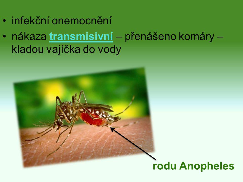 Příčina prvok plasmodium – ve slinách ♀ komárů štípne → plasmodia do krve → játra → krev → červené krvinky