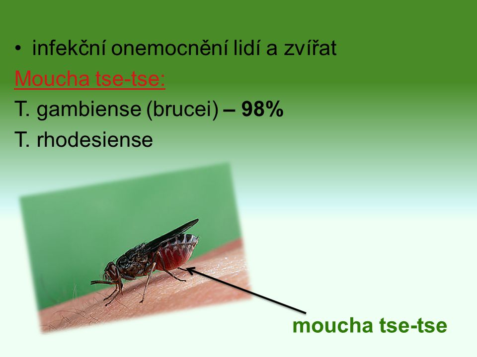 infekční onemocnění lidí a zvířat Moucha tse-tse: T. gambiense (brucei) – 98% T. rhodesiense moucha tse-tse