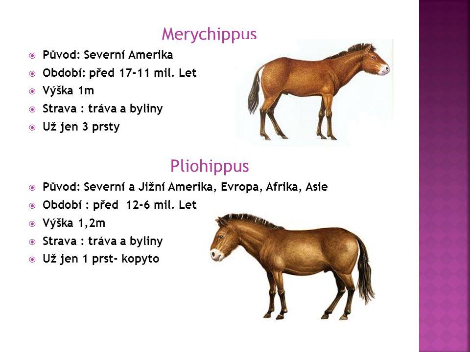 Equus Caballus  Původ: všechny kontinenty kromě Antarktidy a Austrálie  Období: před 5 mil let až do současnosti  Výška 1,32-1,37m  Potrava : tráva a byliny