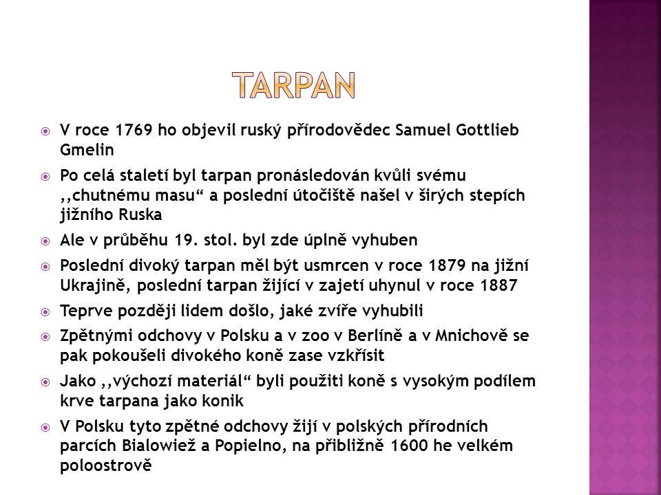  V roce 1769 ho objevil ruský přírodovědec Samuel Gottlieb Gmelin  Po celá staletí byl tarpan pronásledován kvůli svému,,chutnému masu a poslední útočiště našel v širých stepích jižního Ruska  Ale v průběhu 19.