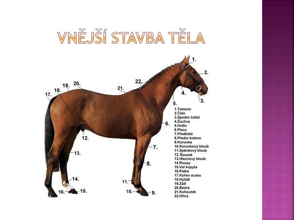  výsledek = otec x matka  Mezek =kůň x osel  Mula = osel x kůň  Zebrula, zebroid = zebra x osel  Zonkey = osel x zebra  Zorse = zebra x kůň  Hebra = kůň x zebra  Zony = zebra x pony  V Death Valley roku 1872 vedla velká mulí stezka, k přepravě bylo využíváno 20 mul, které táhly vahony borátu, cesta byla dlouhá 256km a trvala 10 dní  V průběhu 6ti let se tato mulí stezka stala,,populární a žádný vagon tudy tažený se nepřevrátil a žádná mula během cesty neuhynula